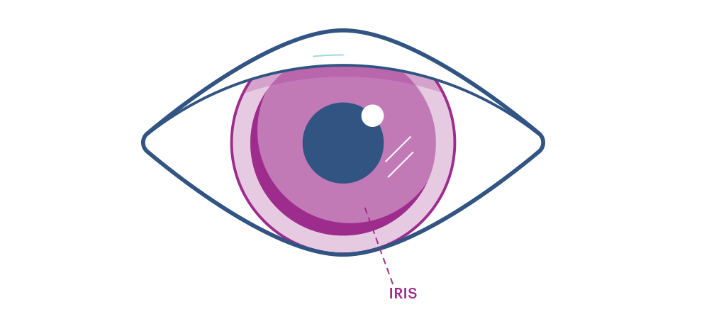Ilustración que muestra el iris del ojo.