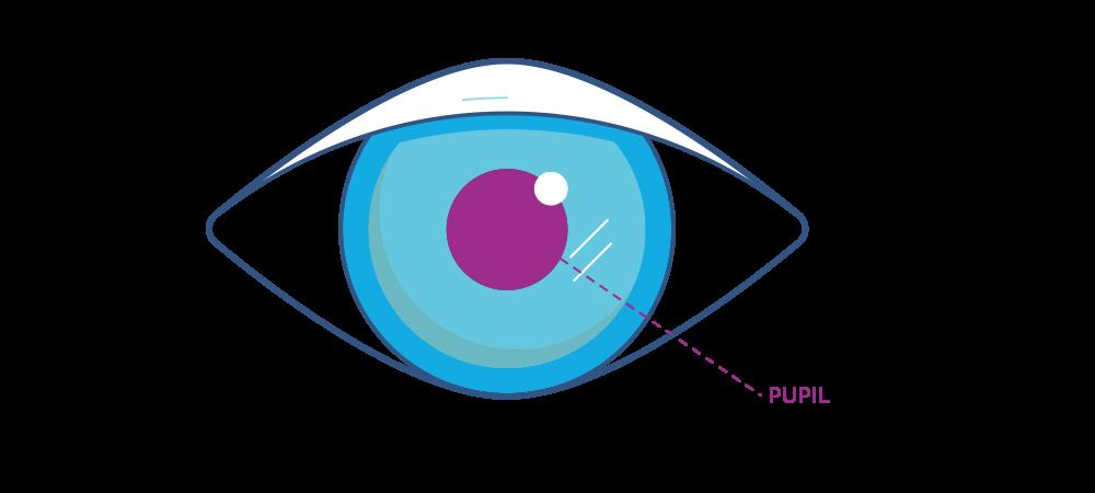 Ilustración que muestra la pupila del ojo.